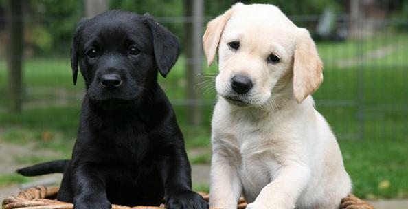 Top 6 Best Dog Breeds, Characteristics & Life Expectancy