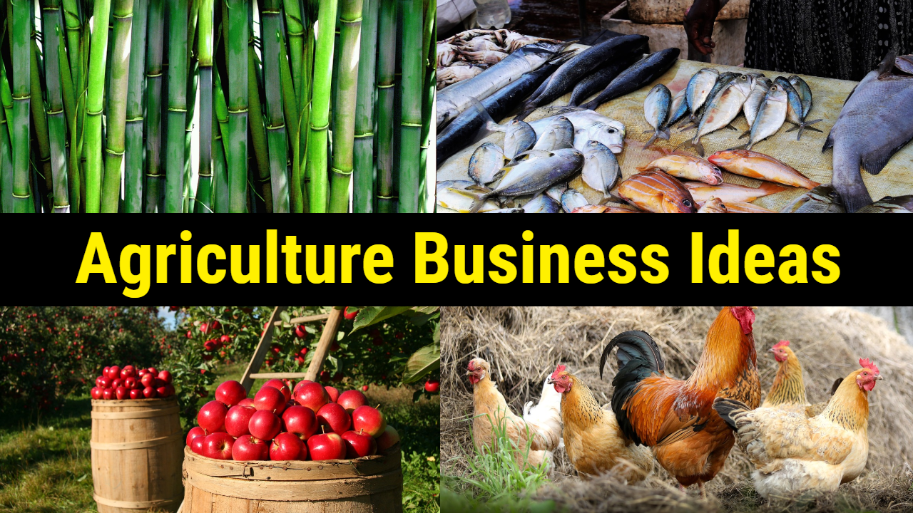 Top Most Lucrative Agricultural Business Ideas In Nigeria